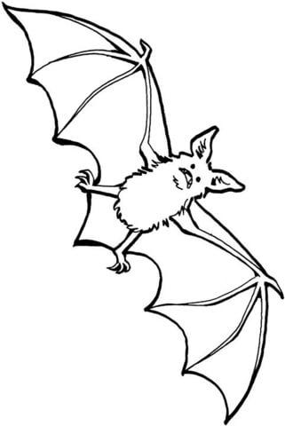 bat-25-coloring-page