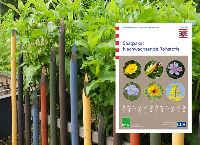 6 Kulturen für den Anbau im Schul- oder privaten Garten_C_LLH_web-e426636d